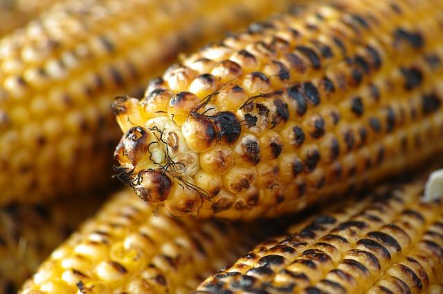 pečená kukuřice