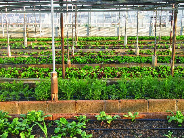 skleník v zahradnictví