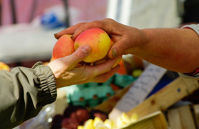 předání jablek